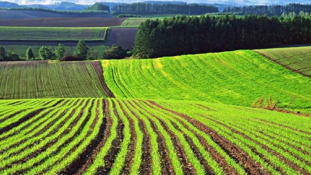 Рынок земли в Украине: сколько украинцев поддерживают теперь