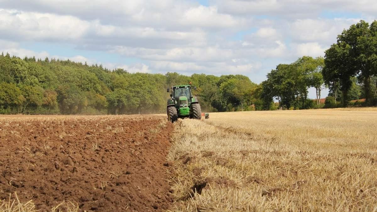 В этом году урожай под угрозой
