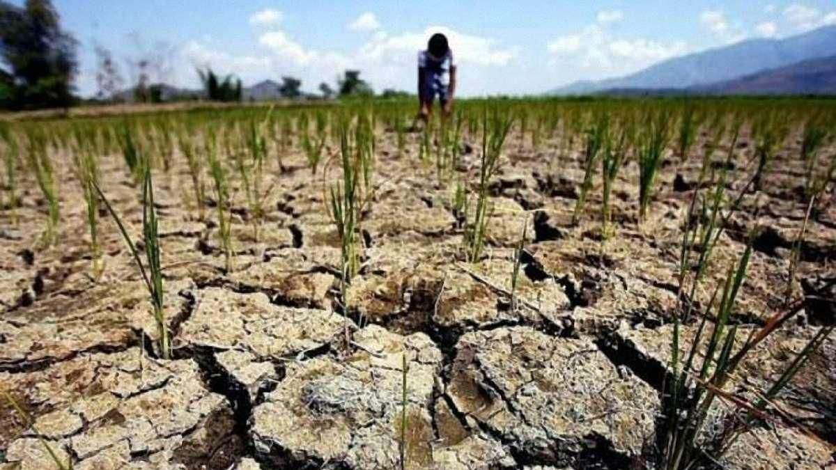 Посуха в Україні: стало відомо, скільки постраждало посівів