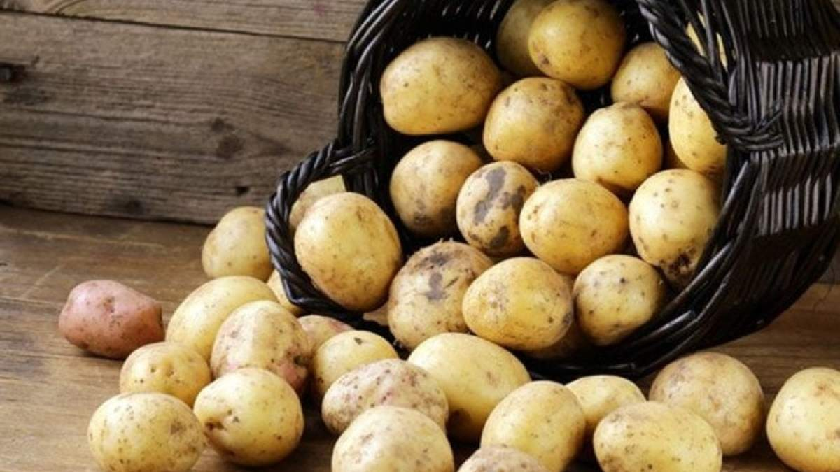 Молода картопля зараз дорога
