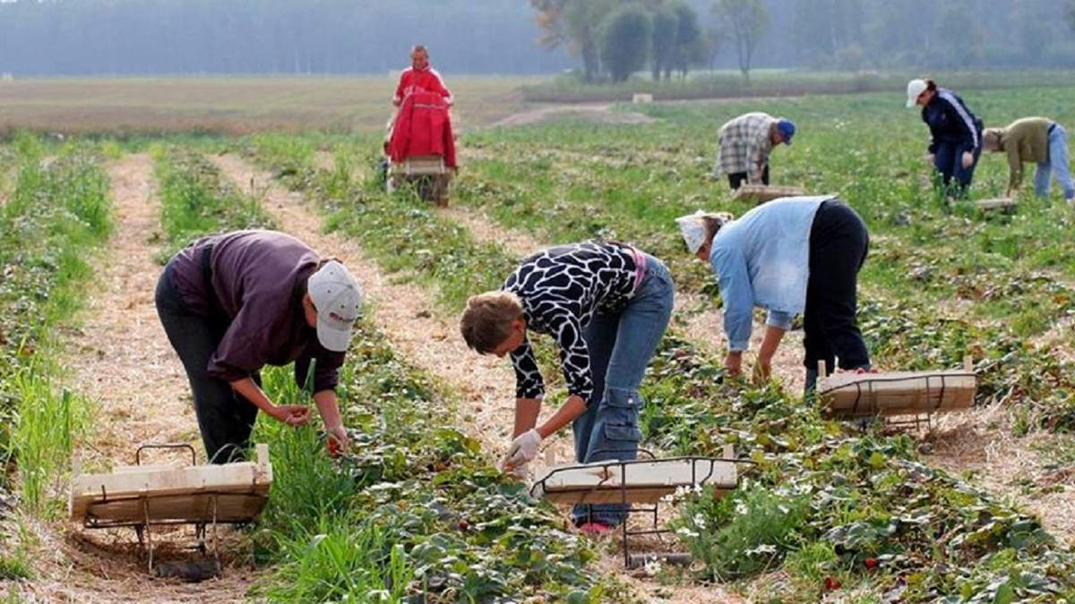 Фермери готові платити працівникам більше