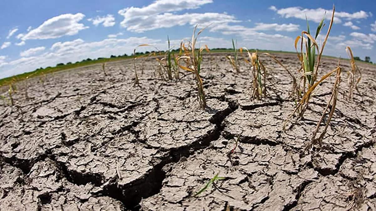 80% посівів пропали через посуху на Одещині