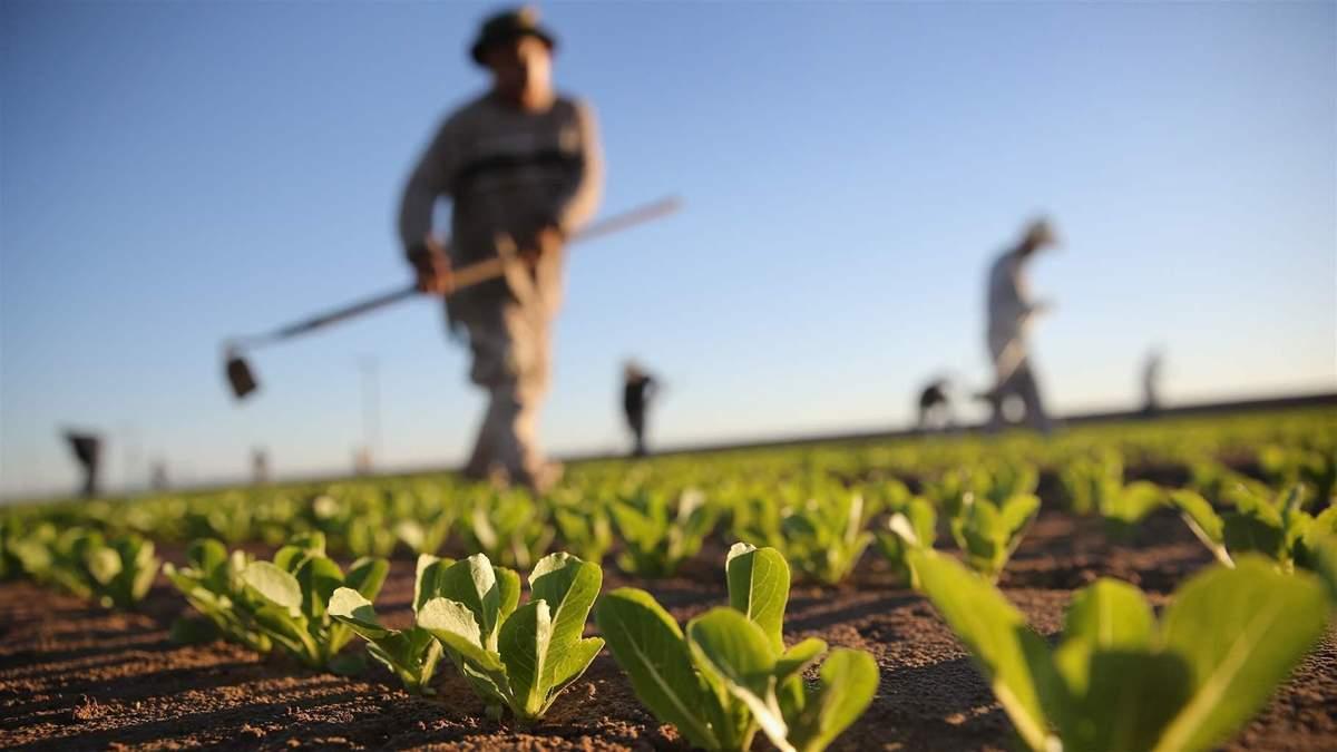 Фермеры в Украине исчезают как класс в 2020: помощь Правительства