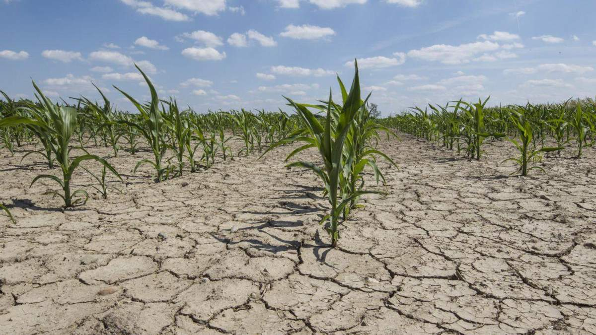 Украина установила мировой земельный антирекорд