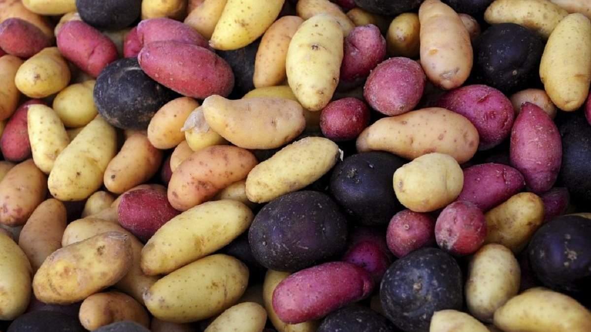 """Через """"ЛДНР"""" в Україну завозили неякісну картоплю"""
