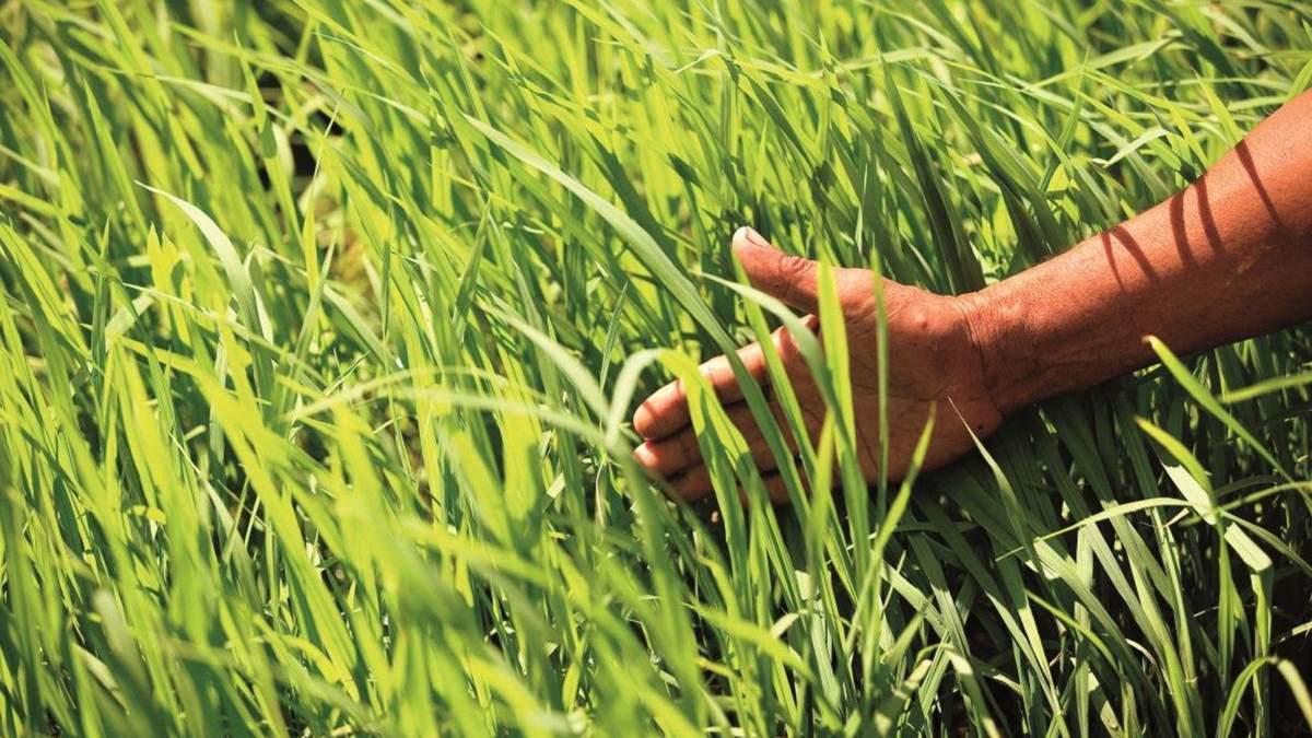 Заощаджуй та зростай / Ілюстративне фото BASF