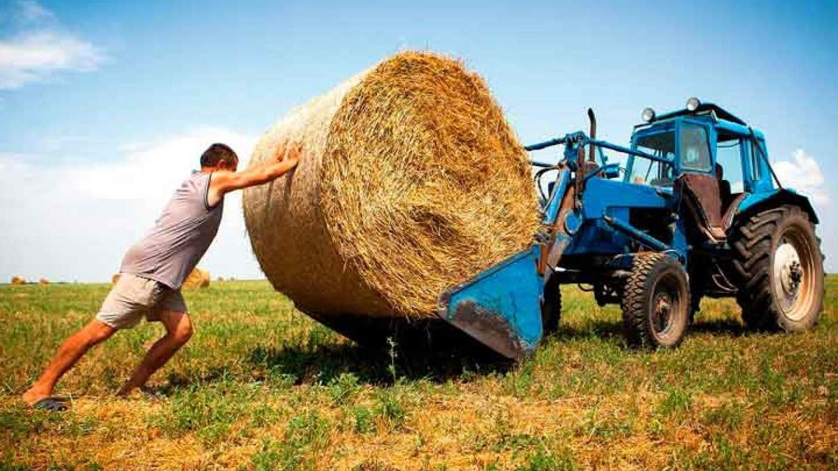 Украинские фермеры