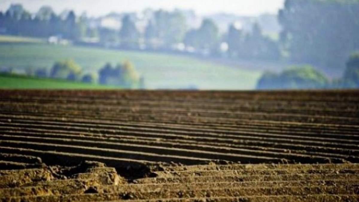 Несмотря на мораторий: сколько гектаров земли приватизировали в Украине/ Иллюстративное фото из соцсетей