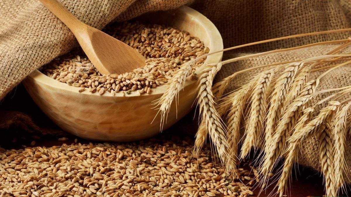 Продаж жита та ячменю: на скільки перевищили минулорічний показник