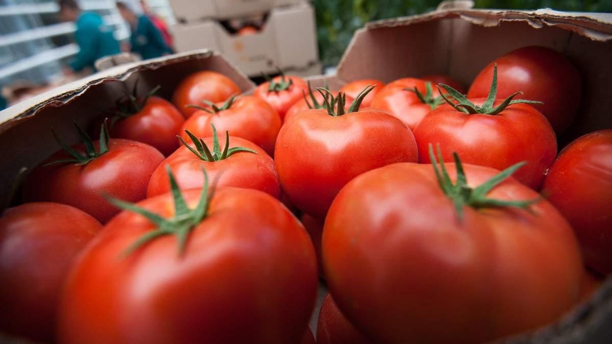 Украина нарастила импорт томатов