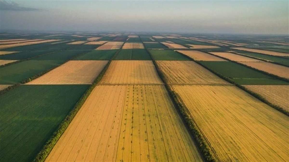 """Скрытые поля: спутниковый анализ выявил 2,3 миллиона """"теневых"""" посевов"""