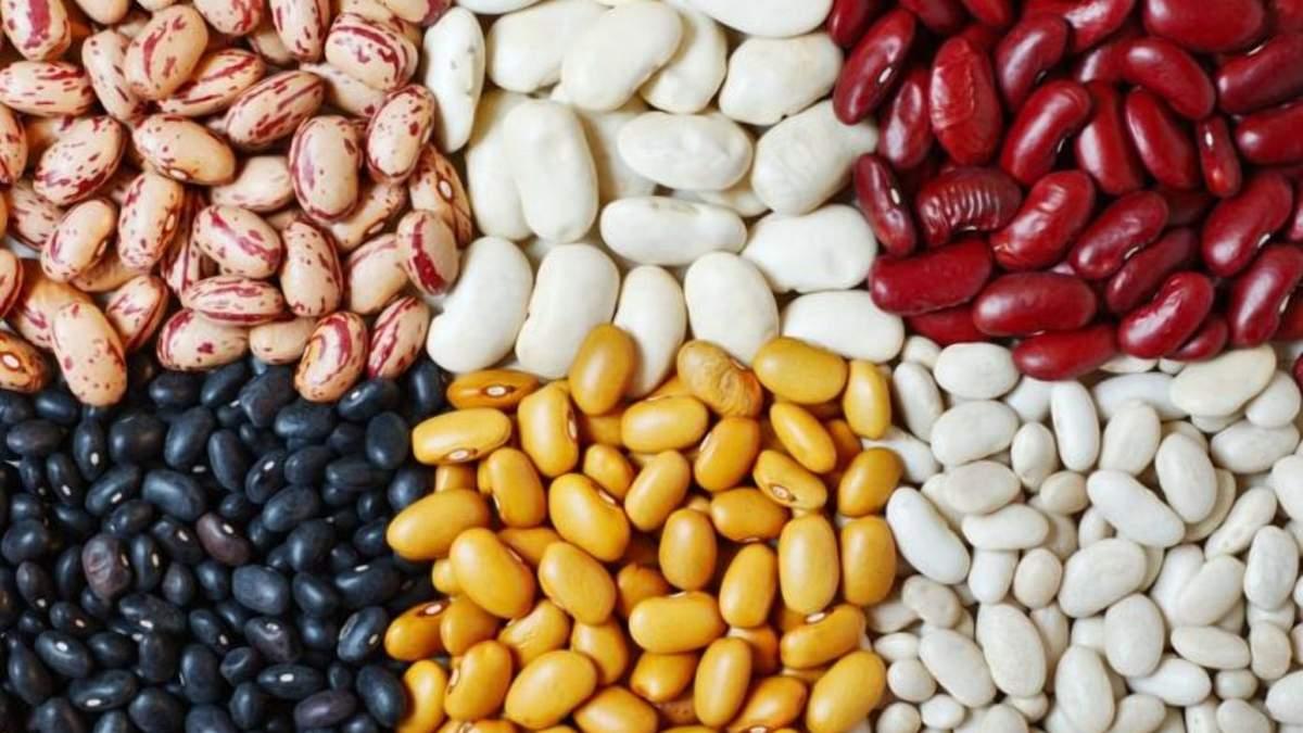 В Європі створили високоврожайні сорти квасолі