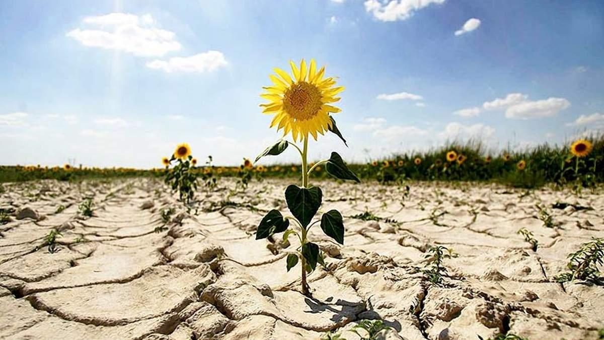 Сільське господарство –найбільша жертва зміни клімату