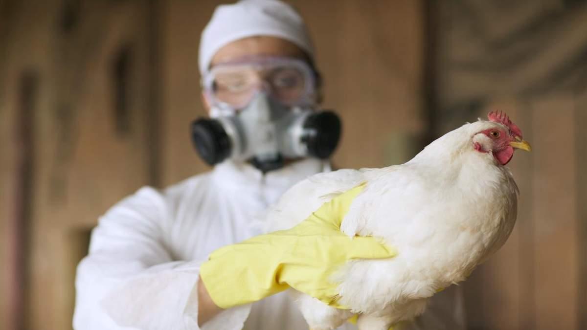 Снова птичий грипп: в Украине выявлен новый случай