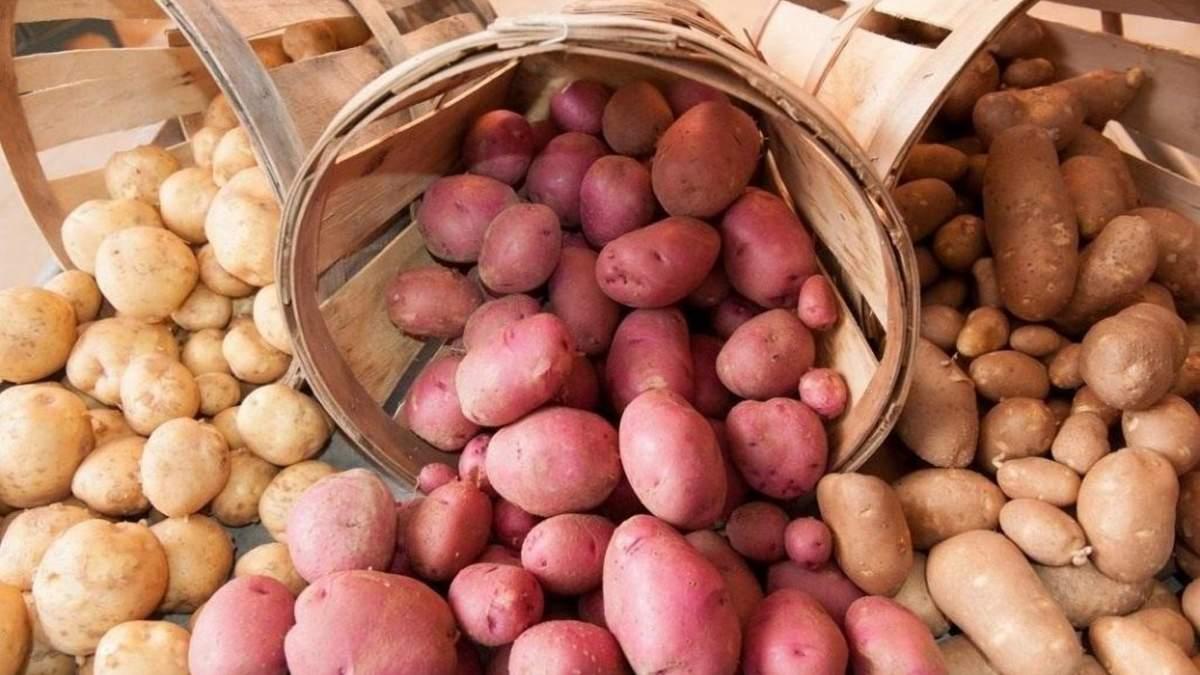 Польський фермер утилізує тисячу тонн картоплі