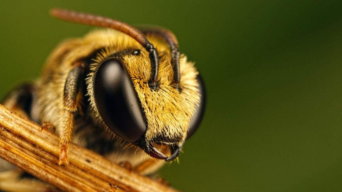 Через аномальне тепло в Україні почали літати бджоли