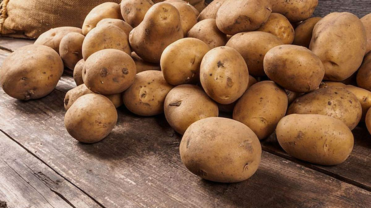 Попри зменшення площі картоплі Польща не боїться нестачі цього продукту