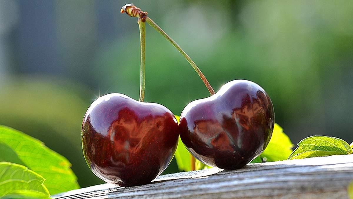 Растрескивание плодов черешни: как предотвратить