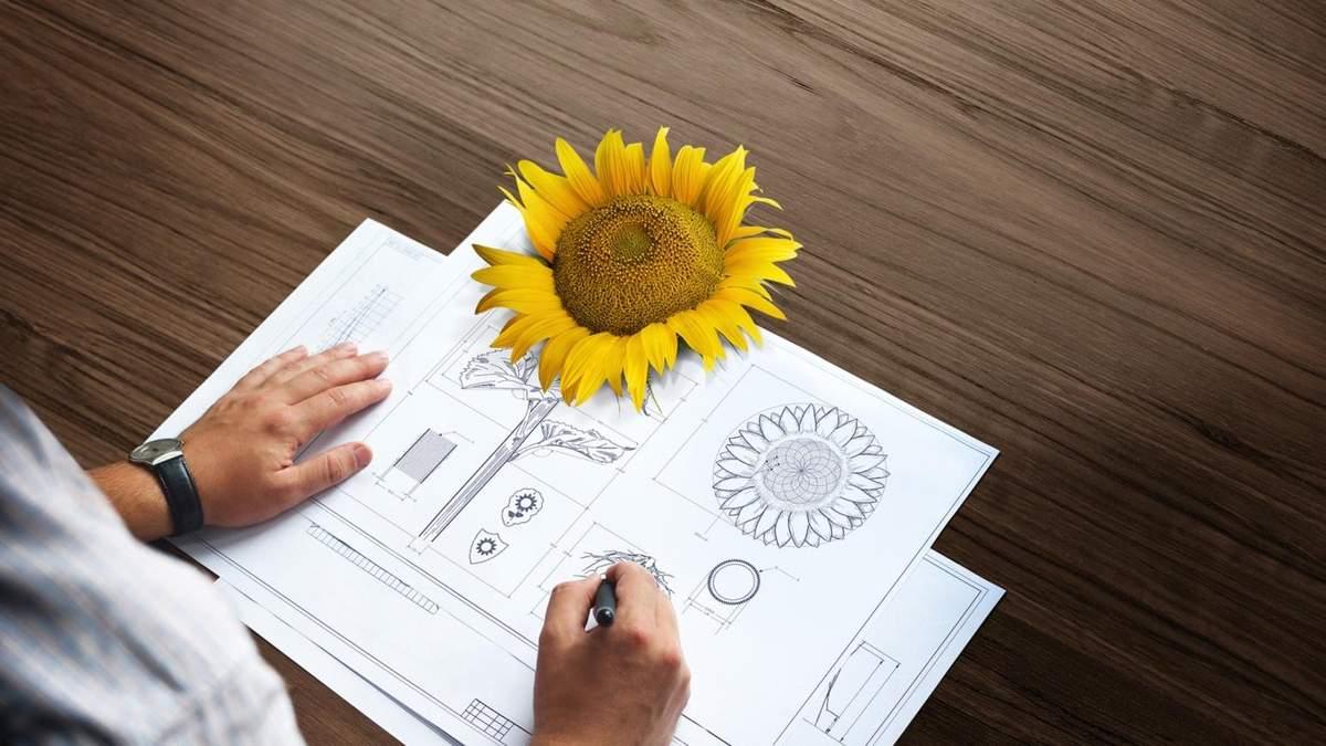 Соняшник і Архітект®