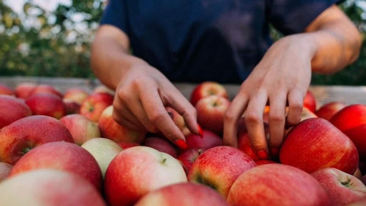 Яблука для експорту: які сорти найперспективніші