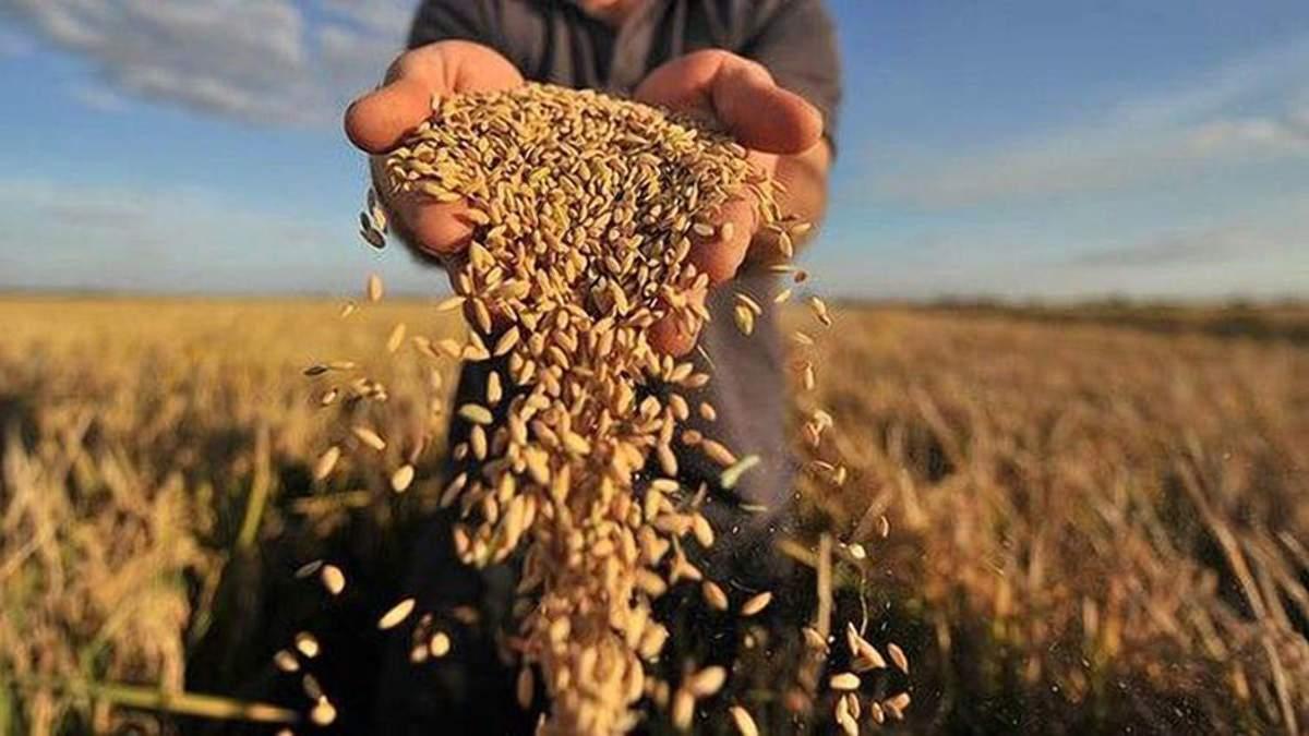 Кабмин ликвидировал зерновой Гарантийный фонд