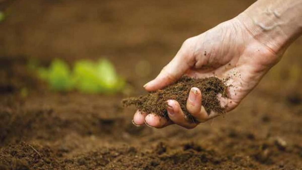 Содержание цинка в украинских почвах: какой показатель