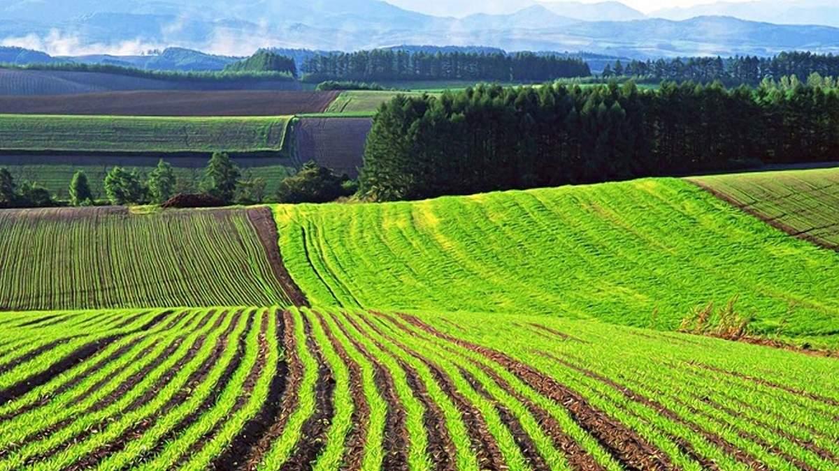 Ціна на землю після реформи становитиме 1,5 – 2 тисячі доларів / Фото з соцмереж