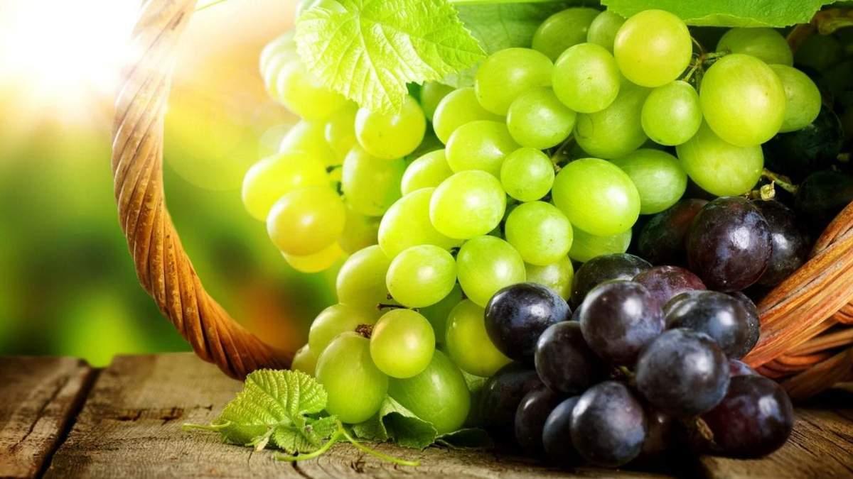 Рекордний урожай винограду: які визначальні складові хорошого результату