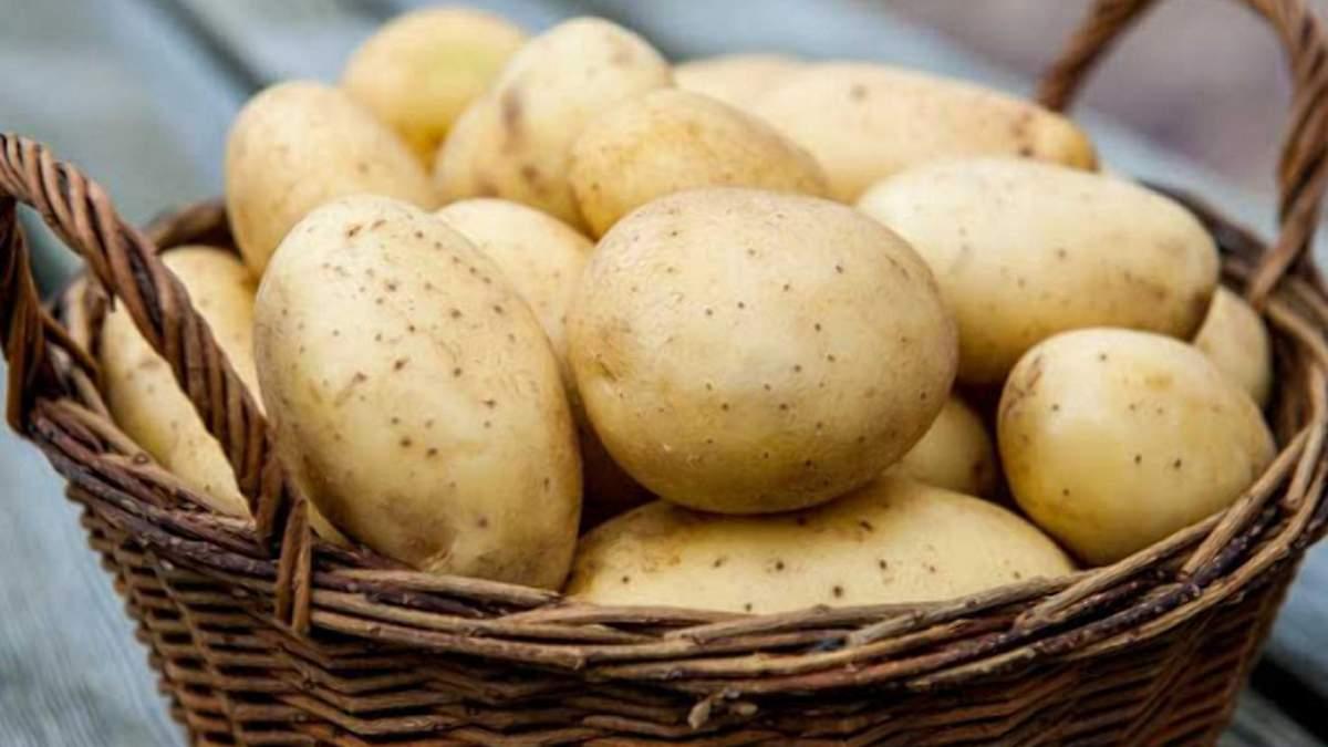 Цена на картофель начинает постепенно расти / Фото из соцсетей