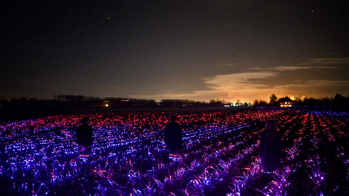 Магия света на полях: нидерландский художник создал фантастическую инсталляцию