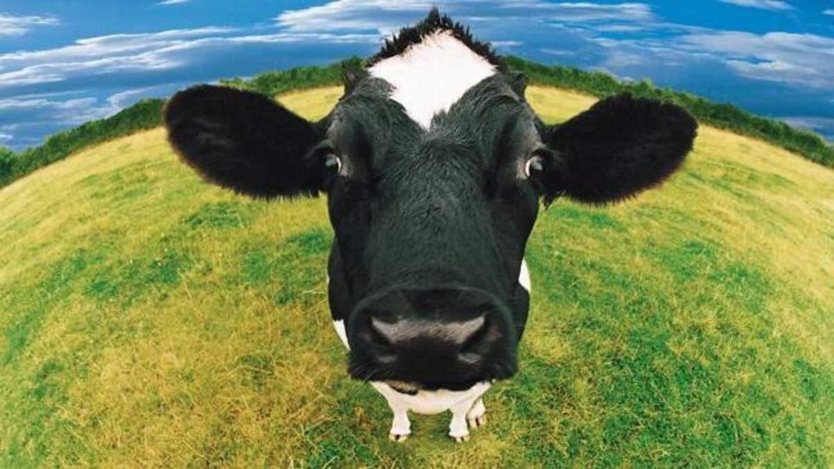 Украинцы массово отказываются от коров