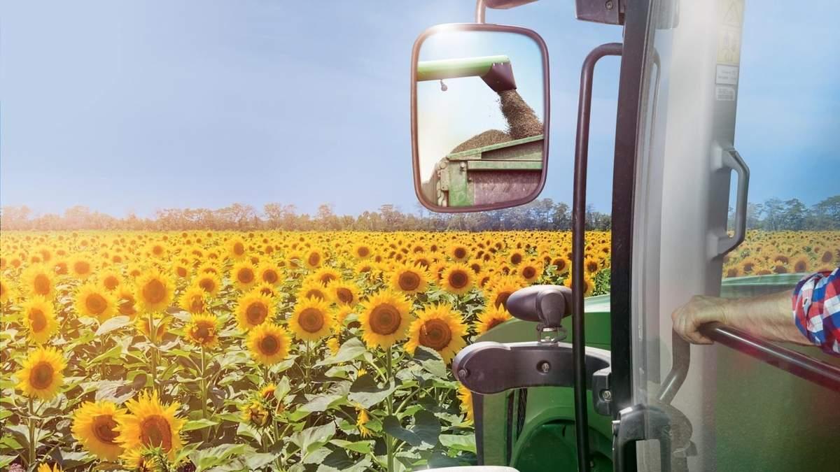 Как собрать высокий урожай подсолнечника