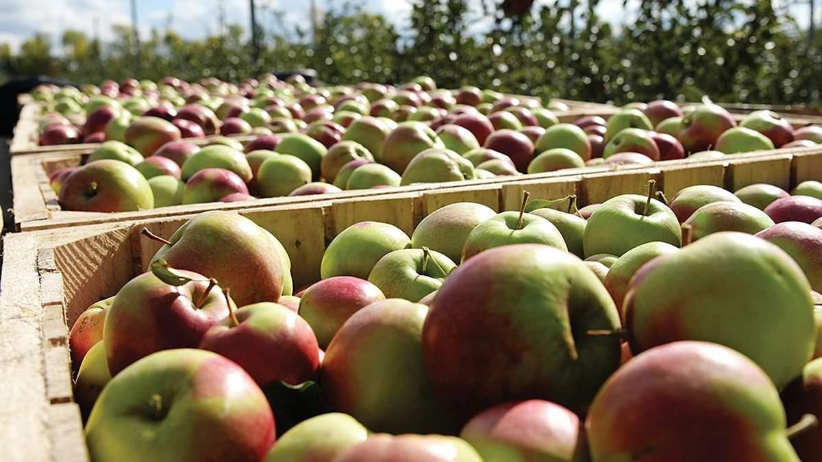 Японские ученые изобрели робота-сборщика фруктов