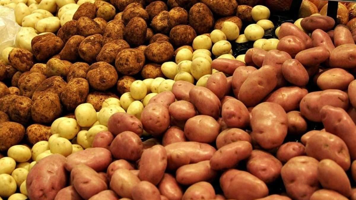 В Украине зарегистрировали 85 новых сортов картофеля