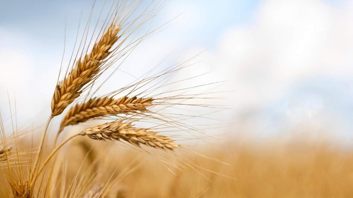 Министерство аграрной политики определило приоритеты на 2021 год