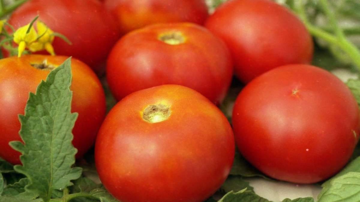 Імпортні томати –хороший стимул для внутрішнього ринку / Фото з соцмереж