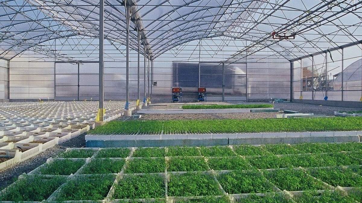 Инновация для теплиц: в Италии разработали эффективную теневую сетку