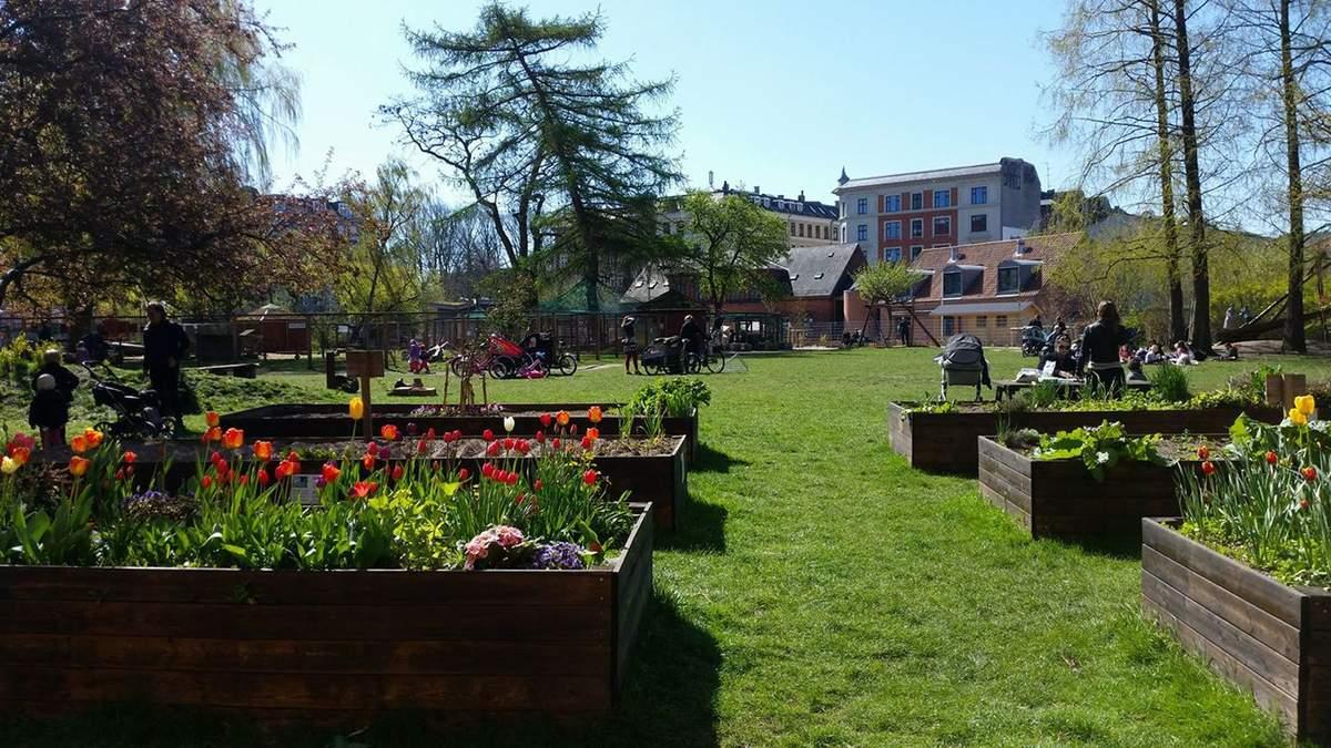 Міські городи: новий агротренд захоплює Європу