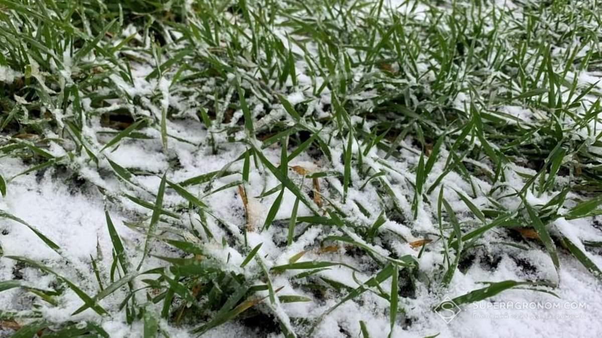 Одесская область рискует остаться без урожая