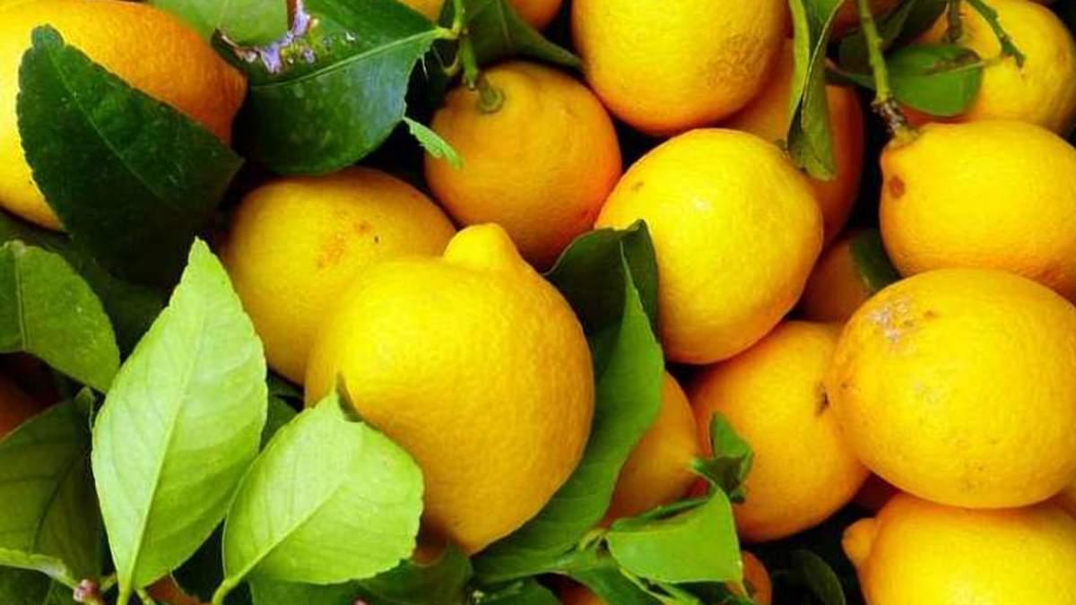 Екзотичні фрукти можна вирощувати і в Україні / Фото з соцмереж
