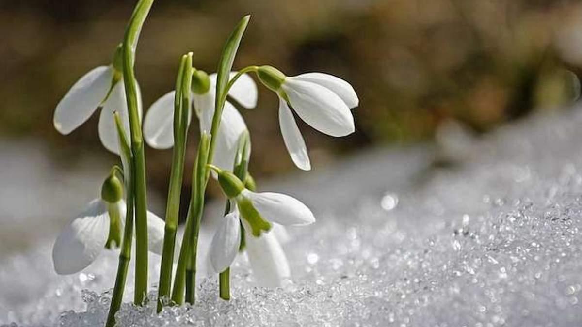 Больших снегопадов в Украине уже не будет / Фото из соцсетей