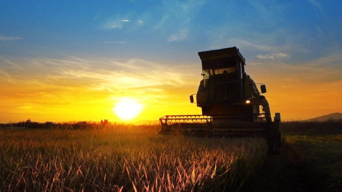 Украина на мировом рынке, цены на пшеницу, перспективные улитки: важнейшие агроновости недели