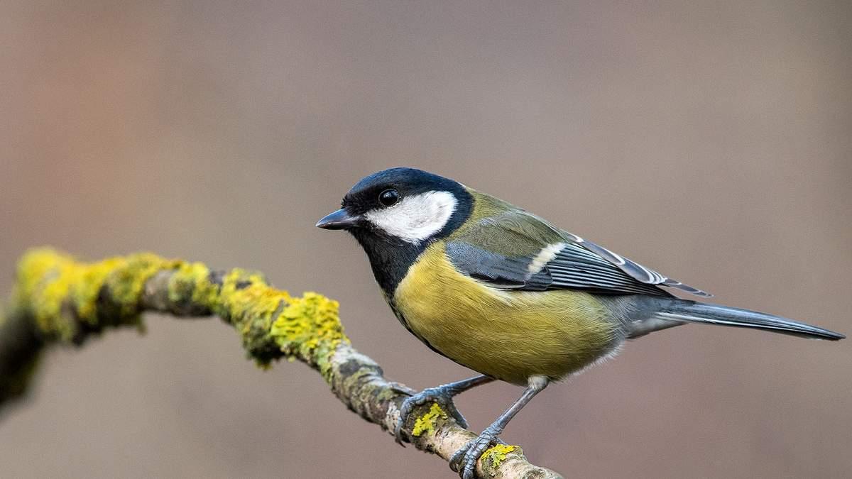Певчие птицы стали жертвами браконьеров / Фото из соцсетей