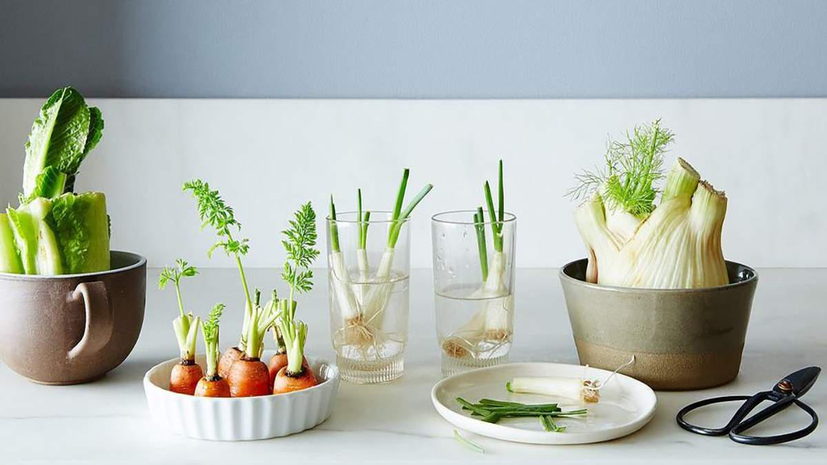 6 овочів, які можна відростити з відрізаних коренів