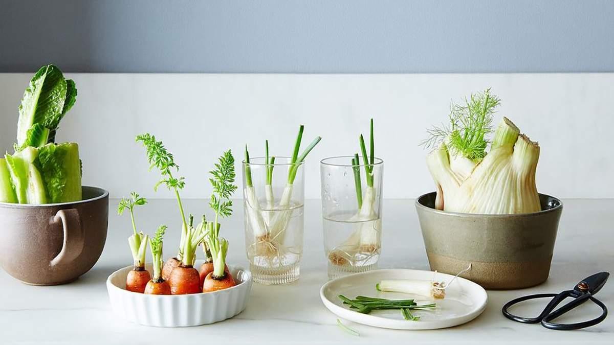 6 овощей, которые можно отрастить из отрезанных корней