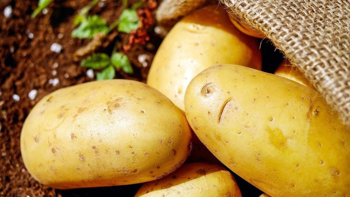 Україна шукає нові ринки збуту для картоплі
