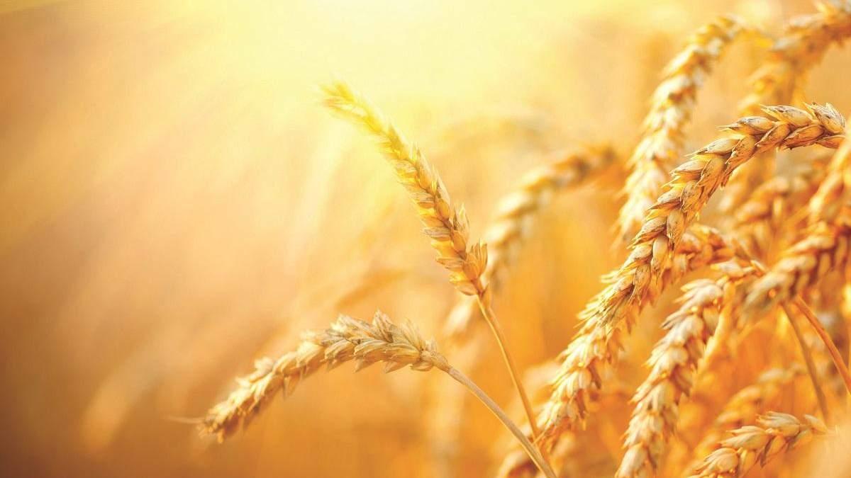 Зернові культури