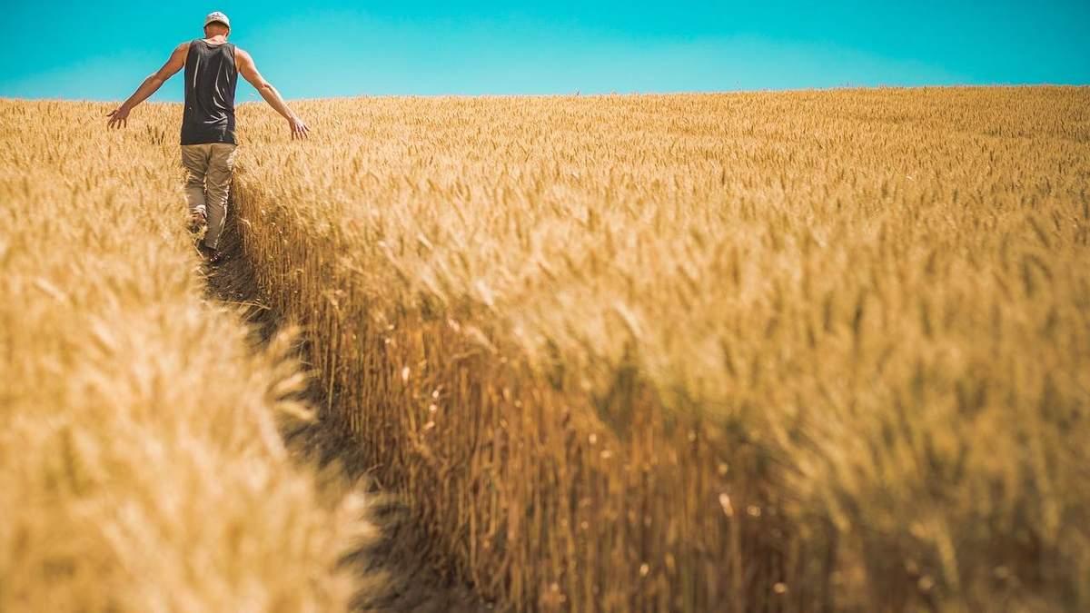 Украинское зерно выйдет на новые рынки
