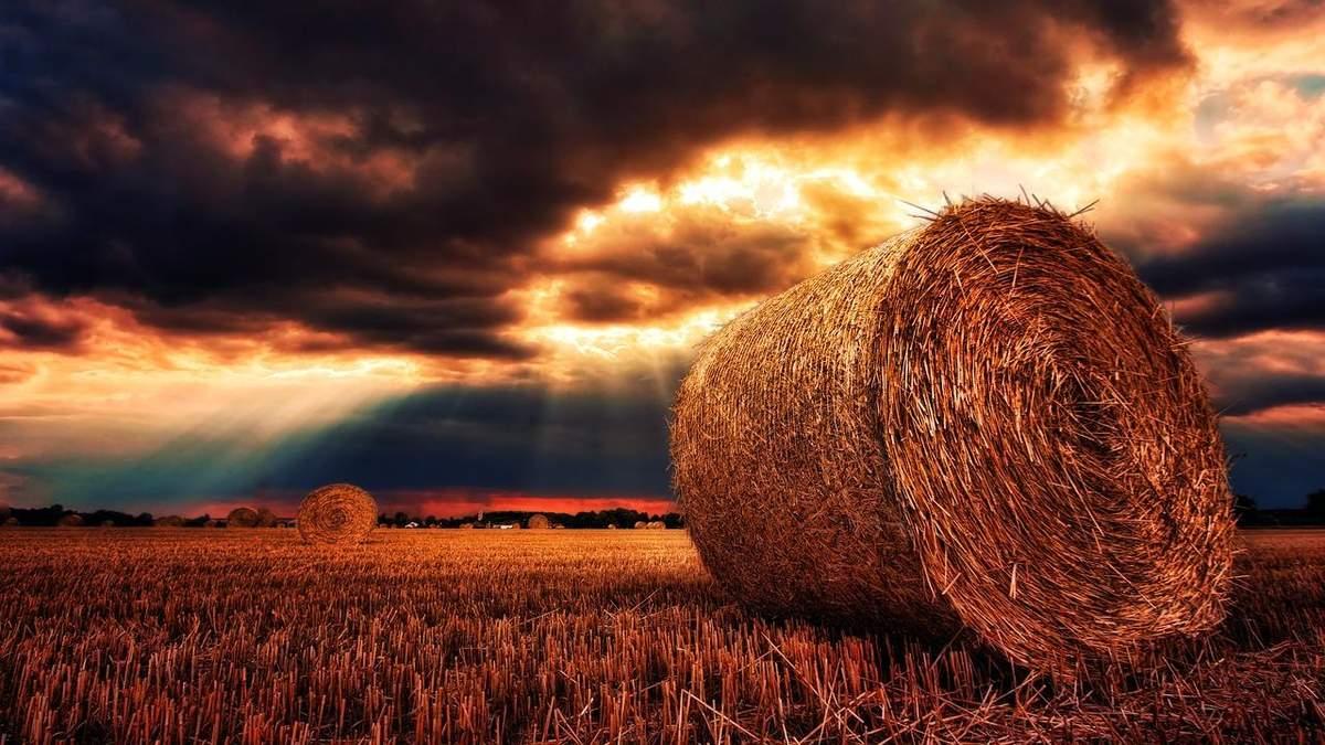 Урожай може постраждати через погоду