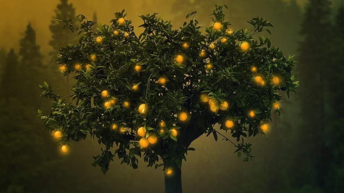 Апельсини стануть джерелом енергії